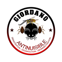 Giordano Antinuisible - Dératisation, Désinfection, Désinsectisation